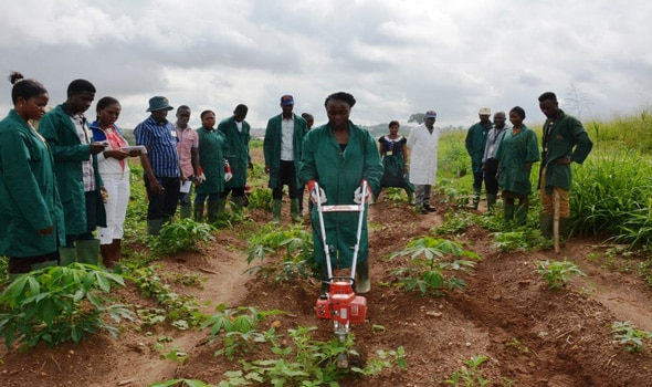 Cassava Weed Management Project