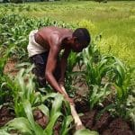 farming system in nigeria