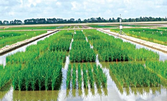 regenerating agriculture for food production