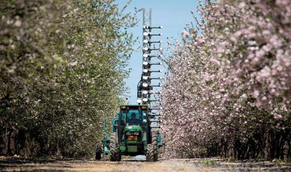 artificial pollination technology