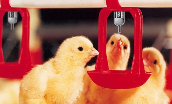 poultry water systems