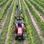 south africa farming challenge